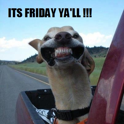 "Funny greyhound with head out of window funny meme saying ""it's friday ya'll"""
